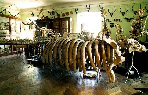 Зоологический музей Днепр