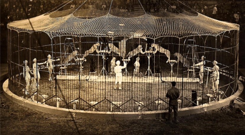 Цирк в Днепре