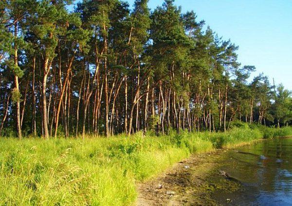 Самарский лес,Днепропетровская область